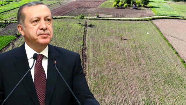 Cumhurbaşkanı Erdoğan'ın gündeme getirdiği kenevirin ekim alanı Vezirköprü'de iki katına çıktı
