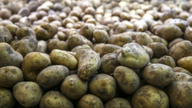 Tarım ve Orman Bakanlığı, 50 bin ton patates ihracatına izin verdi