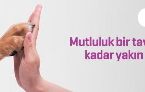 Erzurumlu baklava ustası, diyabet hastaları için 'mor baklava' üretti